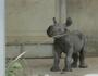Baby Rhino born in Iowa zoo.