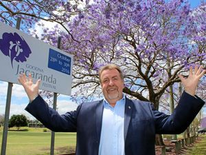 Festival blooms with Jacaranda trees