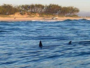 Tweed has no need for shark nets says expert