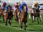 INTERNATIONAL juggernaut Godolphin could have seven starters in next week's Melbourne Cup following second acceptances today.