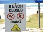 Experts suggest ways to protect yourself during shark attack