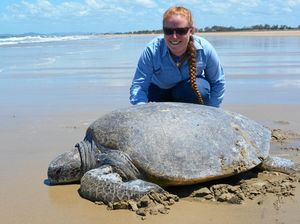 Turtle released off Mackay