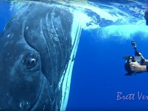 Close up humpback whale encounters