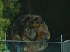Dreamworld ride under investigation.