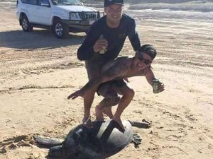 Turtle 'surfers' could be fined up to $20k each