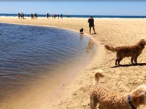 Down at the dog beach