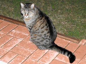Is a cat killer prowling the Sunshine Coast?