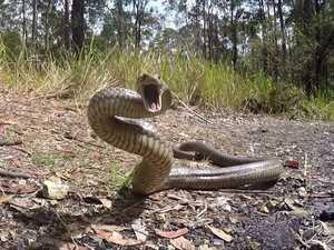 Man rushed to hospital after snake bite