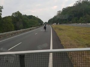 Horsing around on the Bruce Hwy