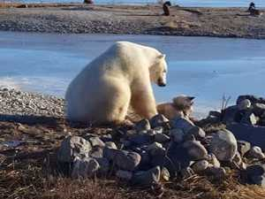 Was dog patted by polar bear just very lucky?