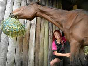 Eating like a horse: Thoroughbred saved from starvation