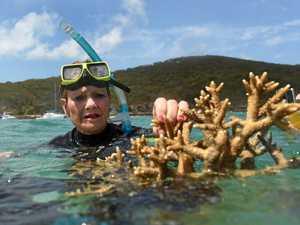 Did Pauline Hanson break the law during her Reef visit?