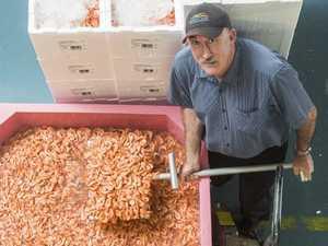 Bumper prawn haul to serve up bountiful Christmas supply
