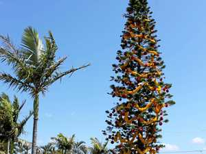 Northern Rivers Christmas Trees