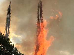 Lightning strikes two pines at Kyogle