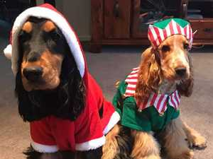 Maycee Jones' dogs can't wait for Christmas... we think?