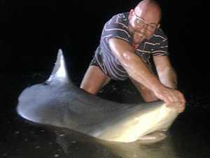 Angler catches boat-sized bull shark, pats it
