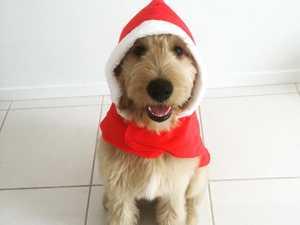 Coast's festive pets