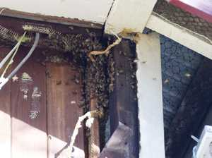 Bees invade home