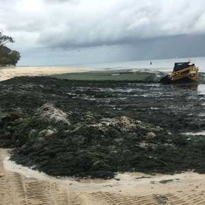 UPDATE: blue-green algae clean up at Bongaree - Caboolture News