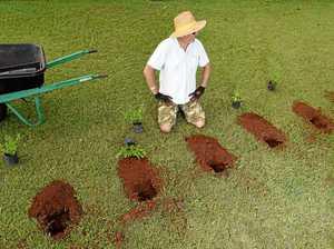 60 plants stolen during heartless midnight raid