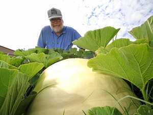 Jim Baxter with one of his Atlantic Giant pumpkins, which he will enter into the JJ Richards and Sons 2017 Stanthorpe Show.