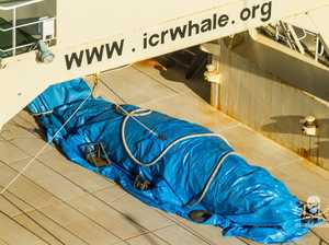 Whalers kill minke days after Turnbull meets Japanese PM