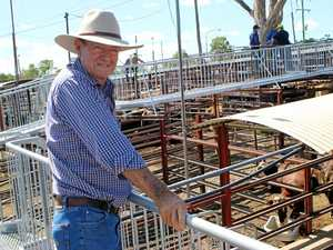 Cattle market up despite scorchers
