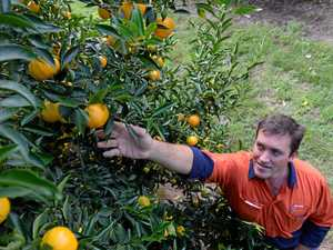 Takeover puts growth in pipeline for Abbotsleigh citrus