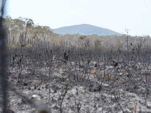COOLUM BLAZE: The aftermath