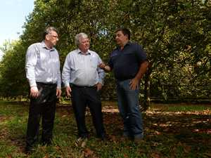 BETTER BUSINESS: Member for Hinkler Keith Pitt, Member for Flynn Ken ODowd and Bundaberg Fruit and Vegetable Growers Geoff Chivers at the funding announcement for Macadamia Nut trade with South Korea.Photo: Mike Knott / NewsMail