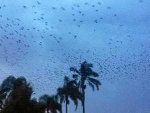 Bats swarm over Warwick