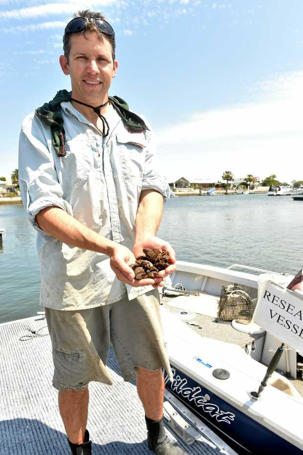 Location Of Marine Biologist Jobs Marine Worms ~ Elsavadorla