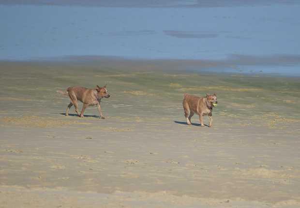 Dog Walking Jobs Sunshine Coast