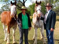 TWO young Clydesdale geldings from The Grove in Adelaide Park, ex Earlesfield Stud at Dululu, took a couple of ribbons at the Ridgelands Show Saturday.