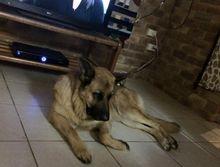 LOST DOG GATTON