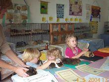 NRCS - Mega Pet Guinea Pig Show