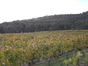 Preston Peak Vineyard