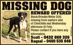Black/Brindle/White DOG missing from eastern side of Chinchilla last Wednesday afternoon (8 Feb). Pl...