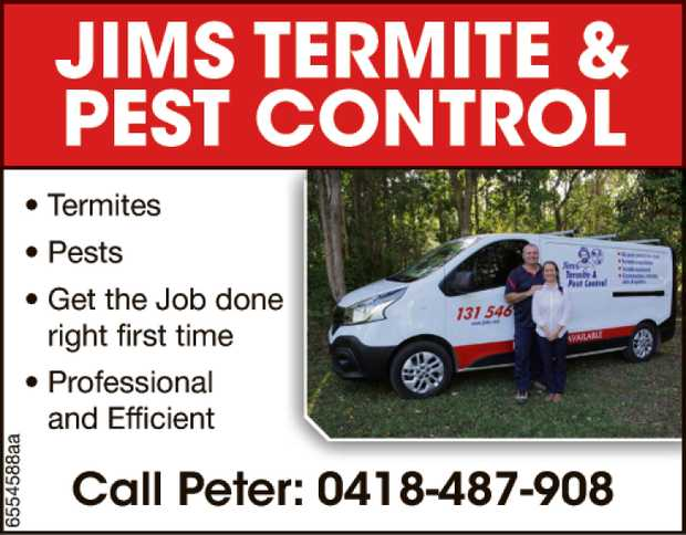 Termites