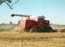 MASSEY Ferguson 850 header, 1985 model, 4WD, good working condition, $25,000 property sold, make...