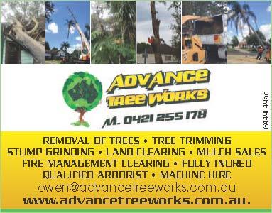 Tree trimming maintenance  Powerline Tree trimming certified  Mulching & mulch...