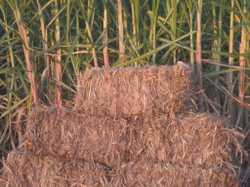 Sugar Cane Mulch $7/bale delivered