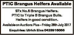 PTIC Brangus Heifers Available 97x No.6 Brangus Heifers. PTIC to Triple B Brangus Bulls. Heifers in...