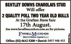 Bentley Downs Charolais stuD Will offer 2 Quality Poll two year olD Bulls At the Grafton Store Sale...