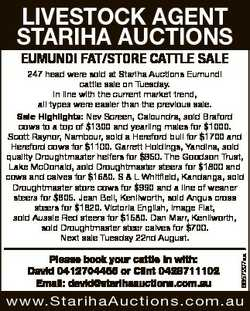 LIVESTOCK AGENT STARIHA AUCTIONS EUMUNDI FAT/STORE CATTLE SALE Please book your cattle in with: Davi...