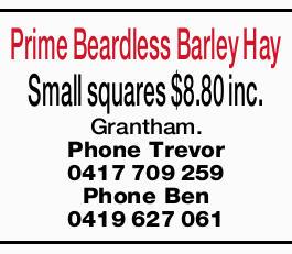 Prime Beardless Barley Hay Small squares $8.80 inc. Grantham. Phone Trevor 0417709259 Phone Ben 0...