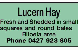 Lucern Hay