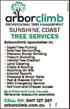 Arborclimb  Professional Tree Management