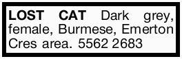 LOST CAT CHOCOLATE female, Burmese, Emerton Cres area. 55622683